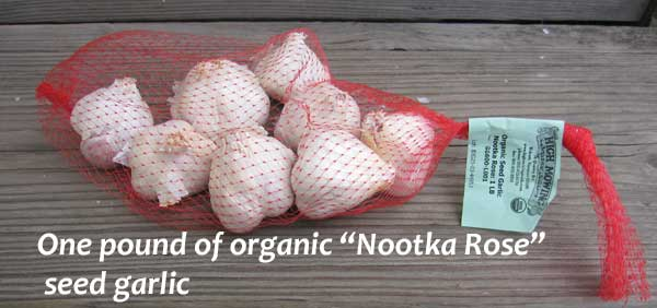 seed garlic Nootka Rose