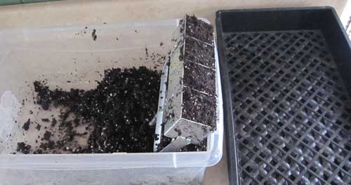 soil blocks filled with potting mix